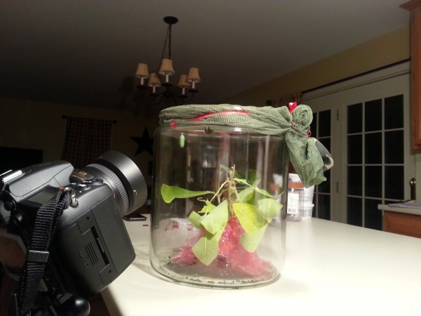 Overnight Time Lapse of Caterpillar