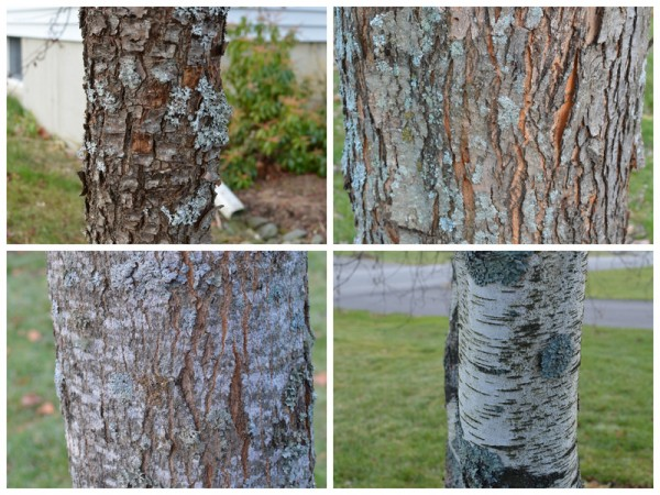 Tree Bark Collage
