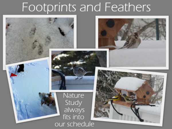 Footprints and Feathers