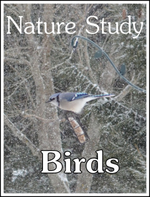 Bird Nature Study