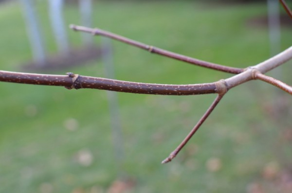 Seeing History on a Twig
