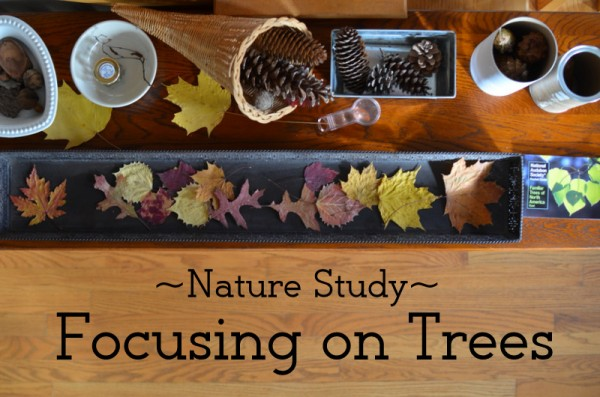 Nature Study Focus Area: Trees