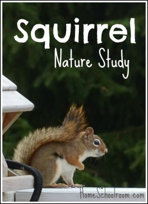 Squirrel Nature Study from Home Schoolroom